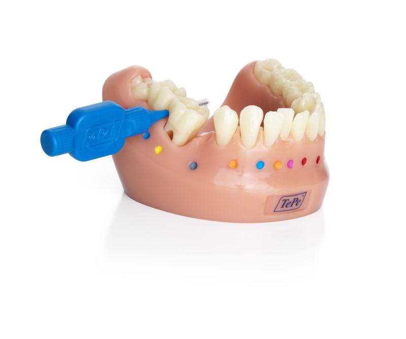 tepe_dentalmodel_1